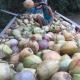 Giá dừa khô Bến Tre hiện nay như thế nào ?